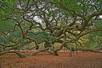 Angel Oak 3A