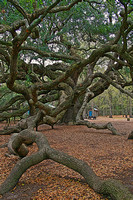 Angel Oak 5A