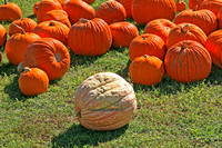 Greenville Pumpkins 0905