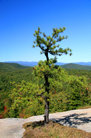 Dupont State Forest 0922
